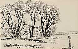 #843 ~ Sandeman - Untitled - Tree Sketch
