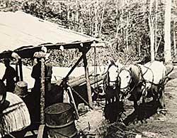 #754 ~ Johnston - Horses at Camp