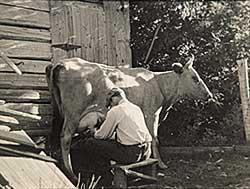 #755 ~ Johnston - Milking the Cow