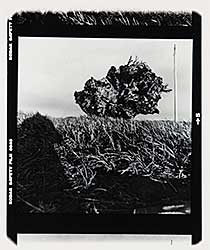 #354 ~ Nishimura - Roots Up-Rooted