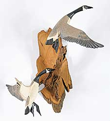 #139 ~ Ruch - Canada Geese