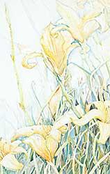 #1167 ~ Juno - Fields of Delight