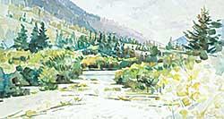 #1199 ~ Vest - East of Gold River, B.C.