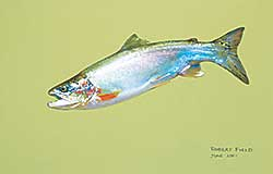 #426 ~ Field - Untitled - Fish with Green Background
