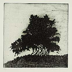 #1128 ~ Hutchings - Bush [4-22]  #A/P