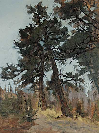 #124.1 ~ Vervoort - Douglas Pines
