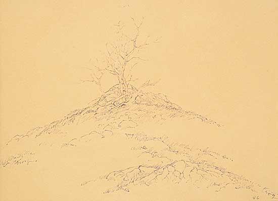 #1212 ~ Troy - Untitled - Tree at Burmis, Alberta