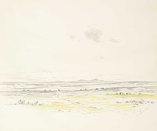 #1072 ~ Gissing - Sweetgrass Yellow Sketch