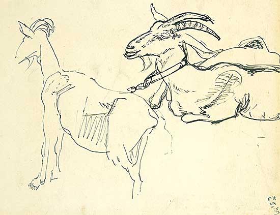#532 ~ Varley - Goats