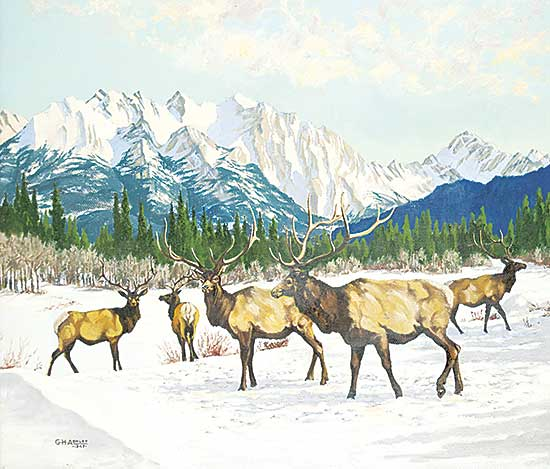 #1005 ~ Ashley - Elk in the Mountains [Winter]