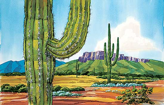 #1069 ~ Campbell - Untitled - Cactus Views