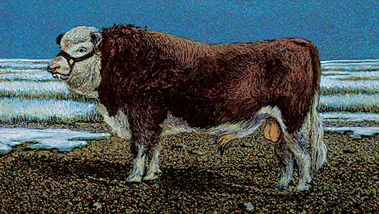 #1434 ~ Wohlfarth - Untitled - Brown and White Bull