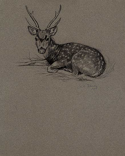 #1239 ~ Palmer - Untitled - Resting Stag